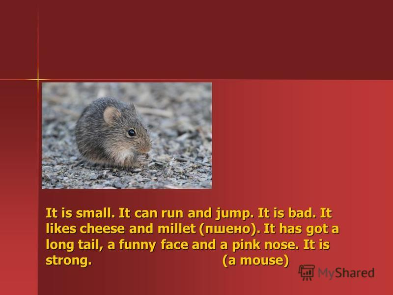 It is small. It can run and jump. It is bad. It likes cheese and millet (пшено). It has got a long tail, a funny face and a pink nose. It is strong. ( (a mouse)