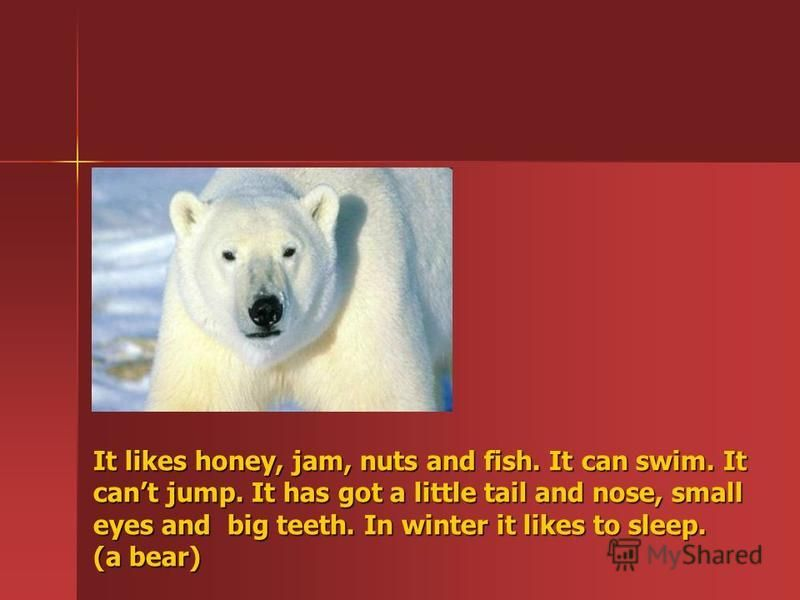 It likes honey, jam, nuts and fish. It can swim. It cant jump. It has got a little tail and nose, small eyes and big teeth. In winter it likes to sleep. (a bear)
