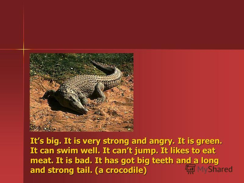 Its big. It is very strong and angry. It is green. It can swim well. It cant jump. It likes to eat meat. It is bad. It has got big teeth and a long and strong tail. (a crocodile)
