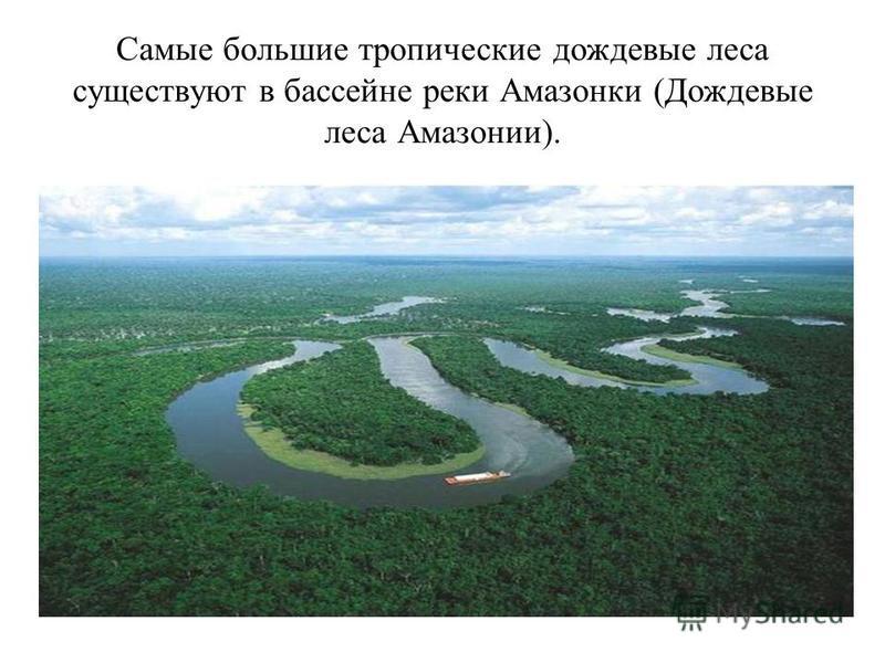 Самые большие тропические дождевые леса существуют в бассейне реки Амазонки (Дождевые леса Амазонии).