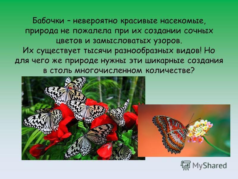 Бабочки – невероятно красивые насекомые, природа не пожалела при их создании сочных цветов и замысловатых узоров. Их существует тысячи разнообразных видов! Но для чего же природе нужны эти шикарные создания в столь многочисленном количестве?