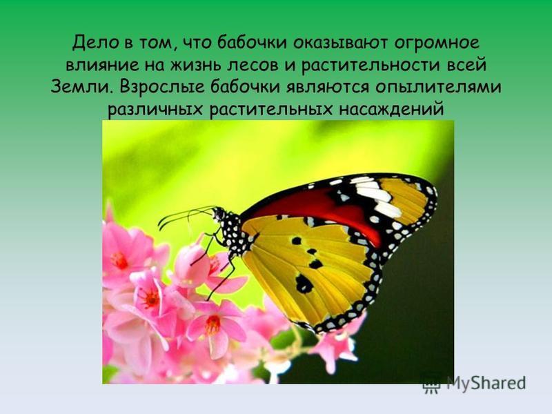 Дело в том, что бабочки оказывают огромное влияние на жизнь лесов и растительности всей Земли. Взрослые бабочки являются опылителями различных растительных насаждений