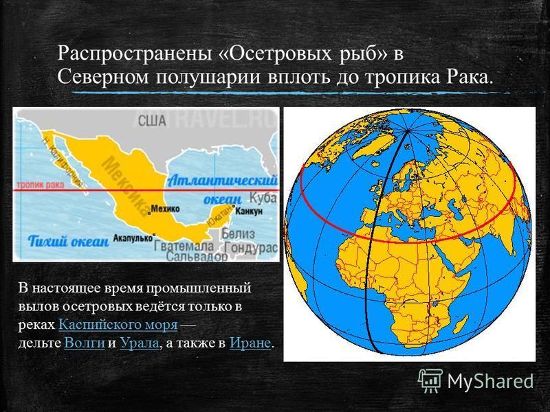 Распространены «Осетровых рыб» в Северном полушарии вплоть до тропика Рака. В настоящее время промышленный вылов осетровых ведётся только в реках Каспийского моря дельте Волги и Урала, а также в Иране.Каспийского моря ВолгиУрала Иране