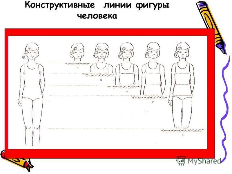 Конструктивные линии фигуры человека