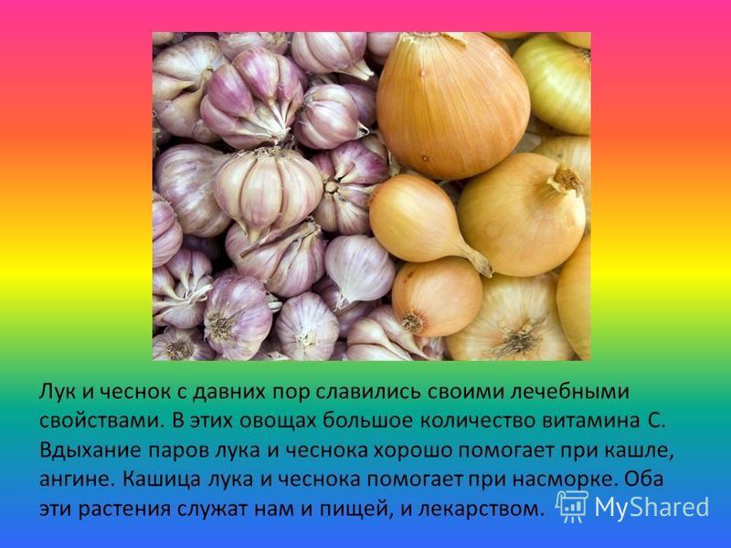 Лук и чеснок с давних пор славились своими лечебными свойствами. В этих овощах большое количество витамина С. Вдыхание паров лука и чеснока хорошо помогает при кашле, ангине. Кашица лука и чеснока помогает при насморке. Оба эти растения служат нам и