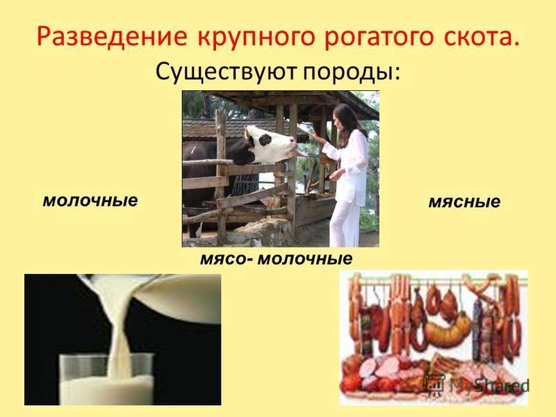 Животные поставляют населению продукты питания: мясо, молоко, сало, яйца. Они обеспечивают людей шерстью, пухом, меховыми шкурами (овчина), щетиной, кожей для изготовления тканей, одежды и обуви. МАСЛО