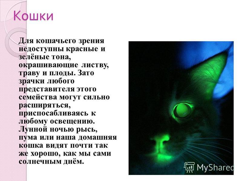 Кошки Для кошачьего зрения недоступны красные и зелёные тона, окрашивающие листву, траву и плоды. Зато зрачки любого представителя этого семейства могут сильно расширяться, приспосабливаясь к любому освещению. Лунной ночью рысь, пума или наша домашня