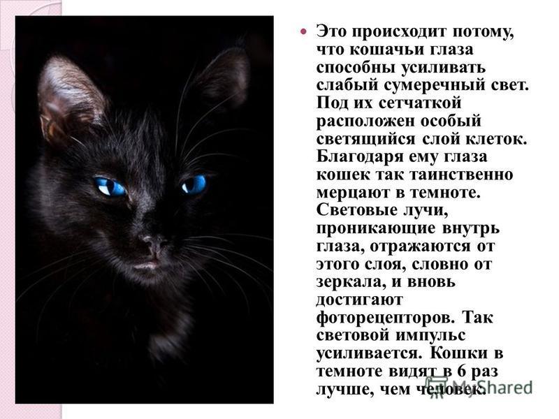Это происходит потому, что кошачьи глаза способны усиливать слабый сумеречный свет. Под их сетчаткой расположен особый светящийся слой клеток. Благодаря ему глаза кошек так таинственно мерцают в темноте. Световые лучи, проникающие внутрь глаза, отраж