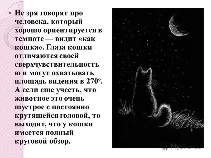 Не зря говорят про человека, который хорошо ориентируется в темноте видит «как кошка». Глаза кошки отличаются своей сверхчувствительность ю и могут охватывать площадь видения в 270º. А если еще учесть, что животное это очень шустрое с постоянно крутя