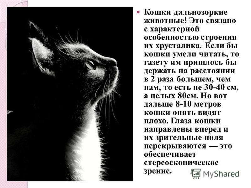 Кошки дальнозоркие животные! Это связано с характерной особенностью строения их хрусталика. Если бы кошки умели читать, то газету им пришлось бы держать на расстоянии в 2 раза большем, чем нам, то есть не 30-40 см, а целых 80 см. Но вот дальше 8-10 м