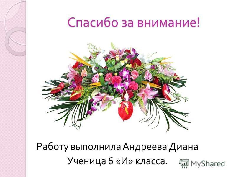 Спасибо за внимание ! Работу выполнила Андреева Диана Ученица 6 « И » класса.