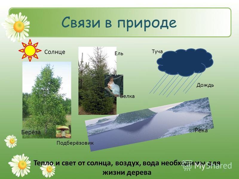 Связи в природе Солнце Берёза Подберёзовик Ель Белка Туча Дождь Река Тепло и свет от солнца, воздух, вода необходимы для жизни дерева 9