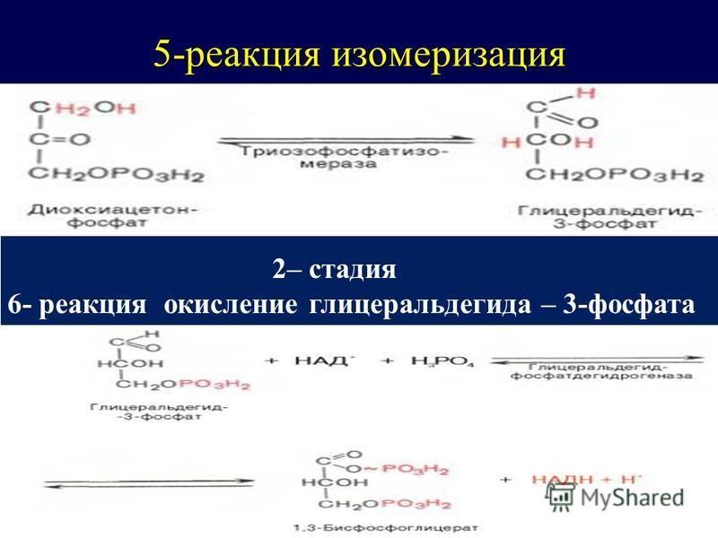 5-реакция изомеризация Стадия Стадия 2– стадия 6- реакция окисление глицеральдегида – 3-фосфата
