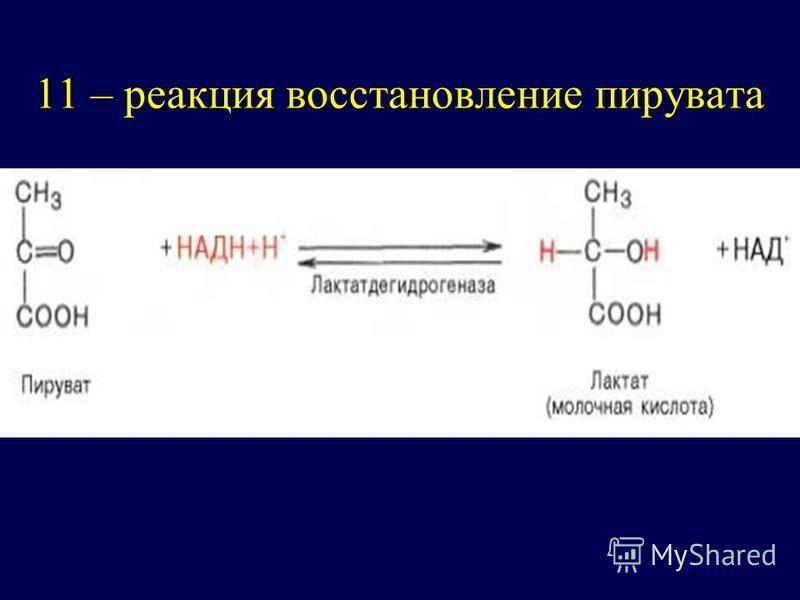 11 – реакция восстановление пирувата