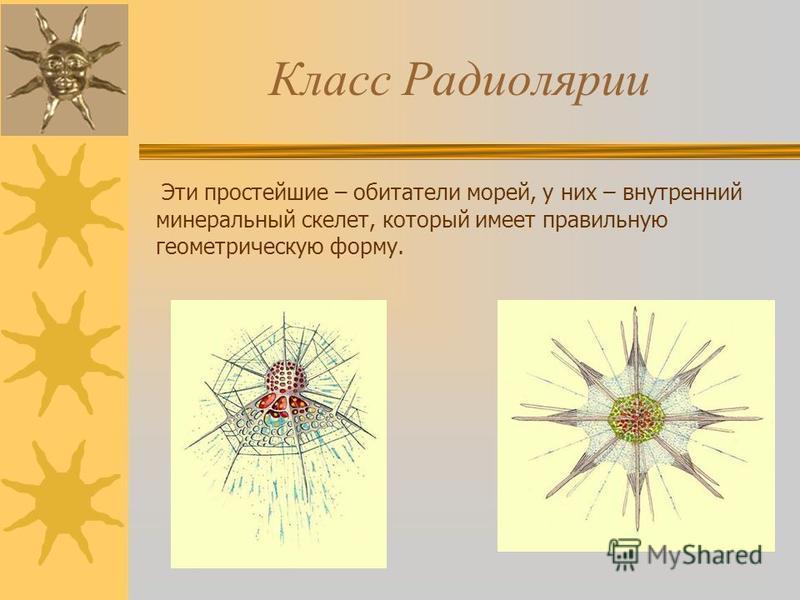 Класс Радиолярии Эти простейшие – обитатели морей, у них – внутренний минеральный скелет, который имеет правильную геометрическую форму.