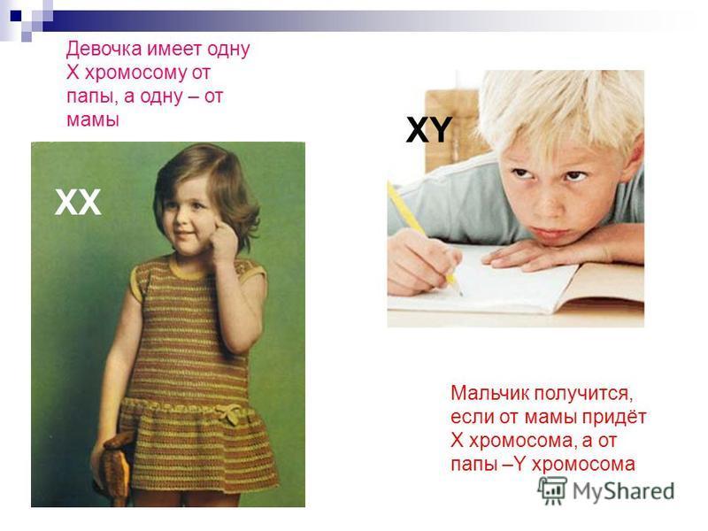 Мальчик получится, если от мамы придёт Х хромосома, а от папы –Y хромосома ХХ XY Девочка имеет одну Х хромосому от папы, а одну – от мамы