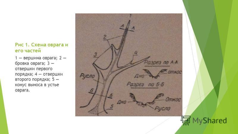 Рис 1. Схема оврага и его частей 1 вершина оврага; 2 бровка оврага; 3 отвертки первого порядка; 4 отвертки второго порядка; 5 конус выноса в устье оврага.