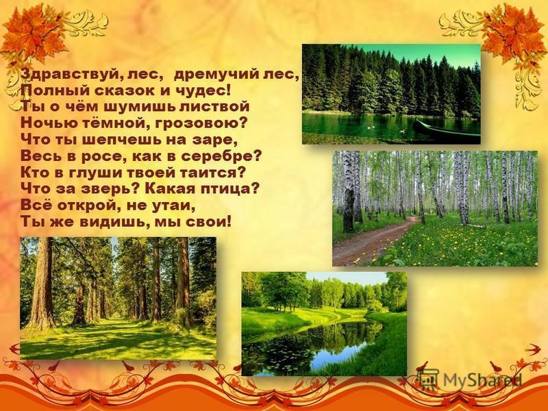 Сценарий лес чудес