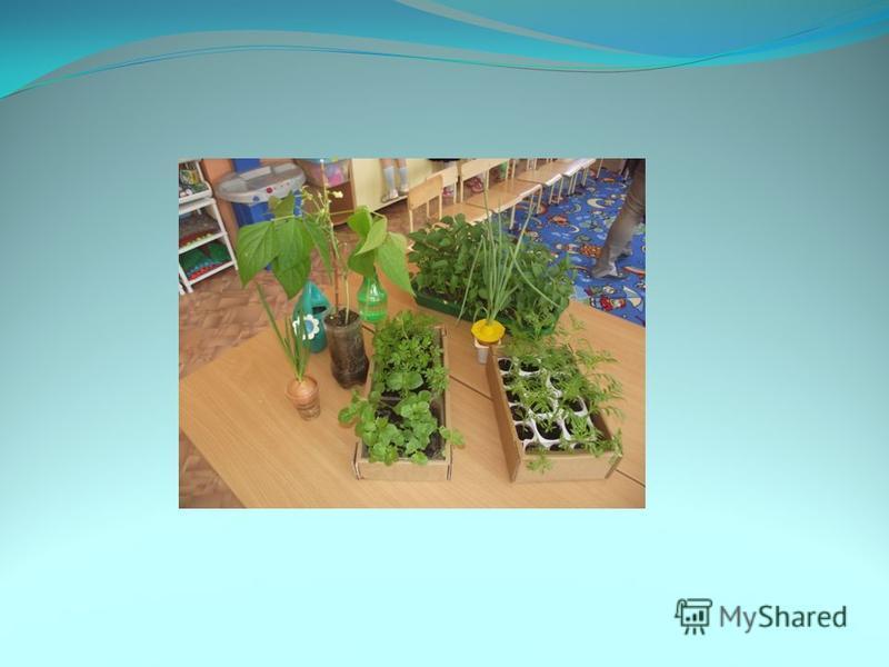 Результат: 1. Дети научились сажать лук и семена других растений в комнатных условиях, ухаживать за ними, познакомились с условиями их роста, научились подмечать пользу и красоту зеленых растений зимой. 2. У детей сформировались знания и представлени