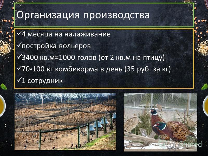Организация производства 4 месяца на налаживание постройка вольеров 3400 кв.м=1000 голов (от 2 кв.м на птицу) 70-100 кг комбикорма в день (35 руб. за кг) 1 сотрудник