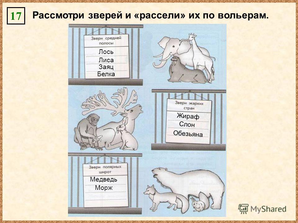 Рассмотри зверей и «рассели» их по вольерам. 17 Лось Лиса Заяц Белка Жираф Слон Обезьяна Медведь Морж