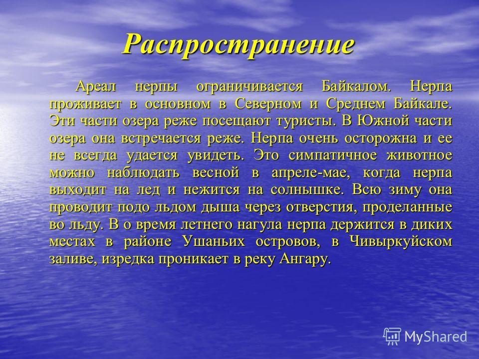 Распространение Ареал нерпы ограничивается Байкалом. Нерпа проживает в основном в Северном и Среднем Байкале. Эти части озера реже посещают туристы. В Южной части озера она встречается реже. Нерпа очень осторожна и ее не всегда удается увидеть. Это с