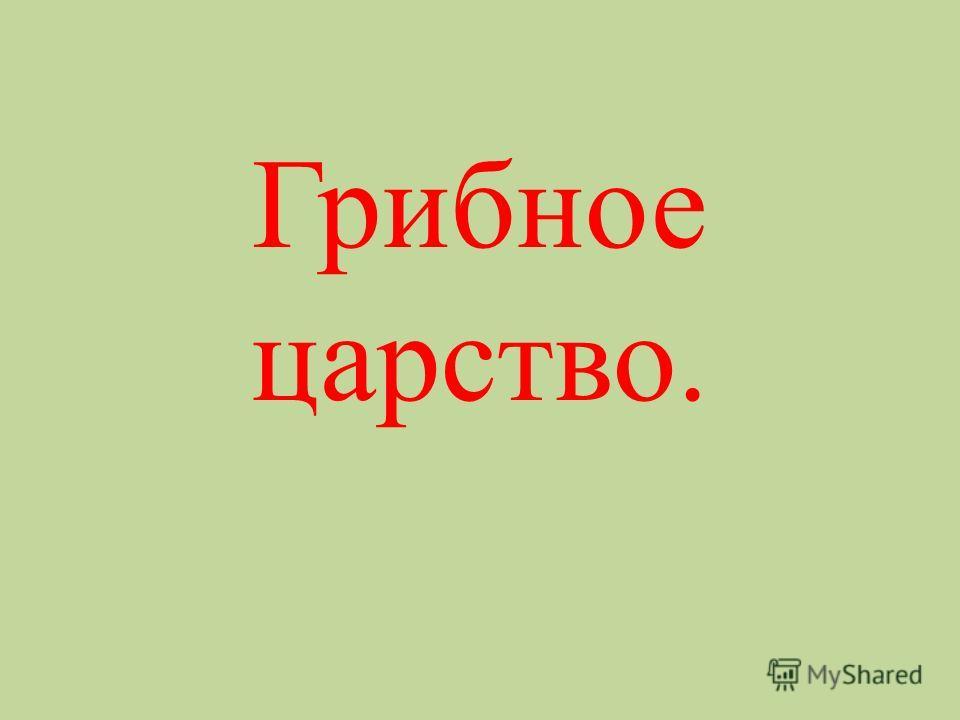 Грибное царство.