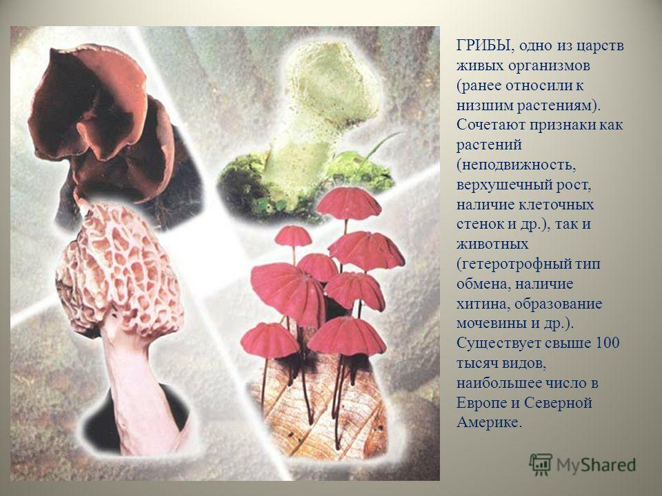 ГРИБЫ, одно из царств живых организмов (ранее относили к низшим растениям). Сочетают признаки как растений (неподвижность, верхушечный рост, наличие клеточных стенок и др.), так и животных (гетеротрофный тип обмена, наличие хитина, образование мочеви