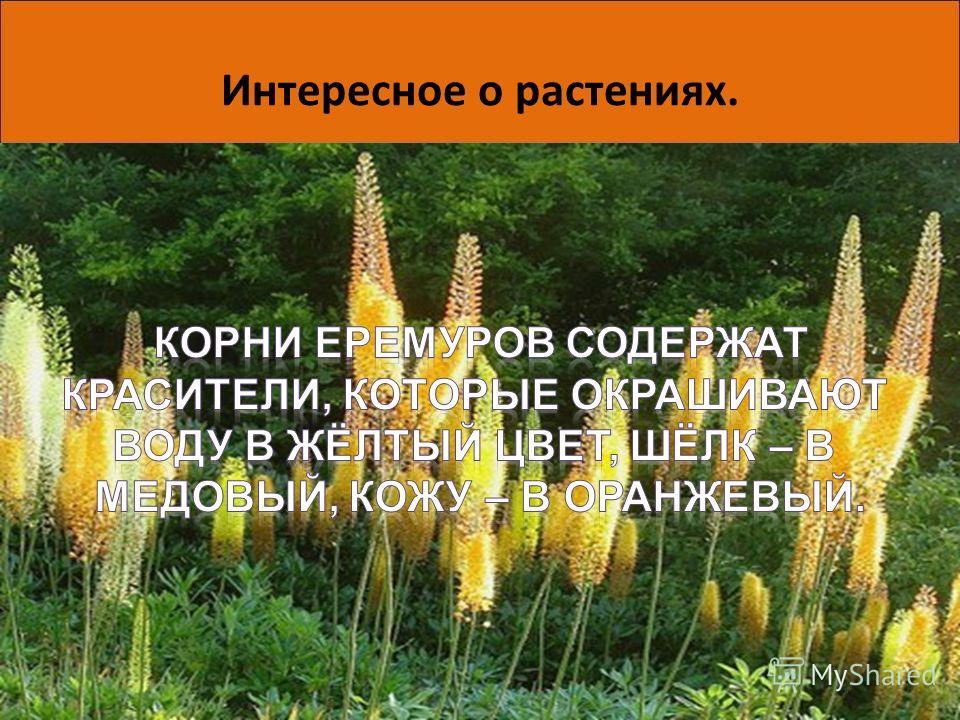 Интересное о растениях. Вот так умеют защитить себя беспомощные, на первый взгляд, растения. А может быть, они не так уж и просты, как мы привыкли считать? Исследования ученых продолжаются, и, возможно, им еще не раз предстоит удивиться. 06.06.201411