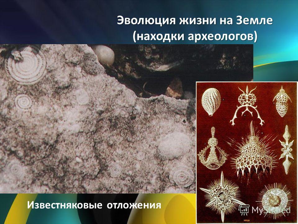Эволюция жизни на Земле (находки археологов) Известняковые отложения