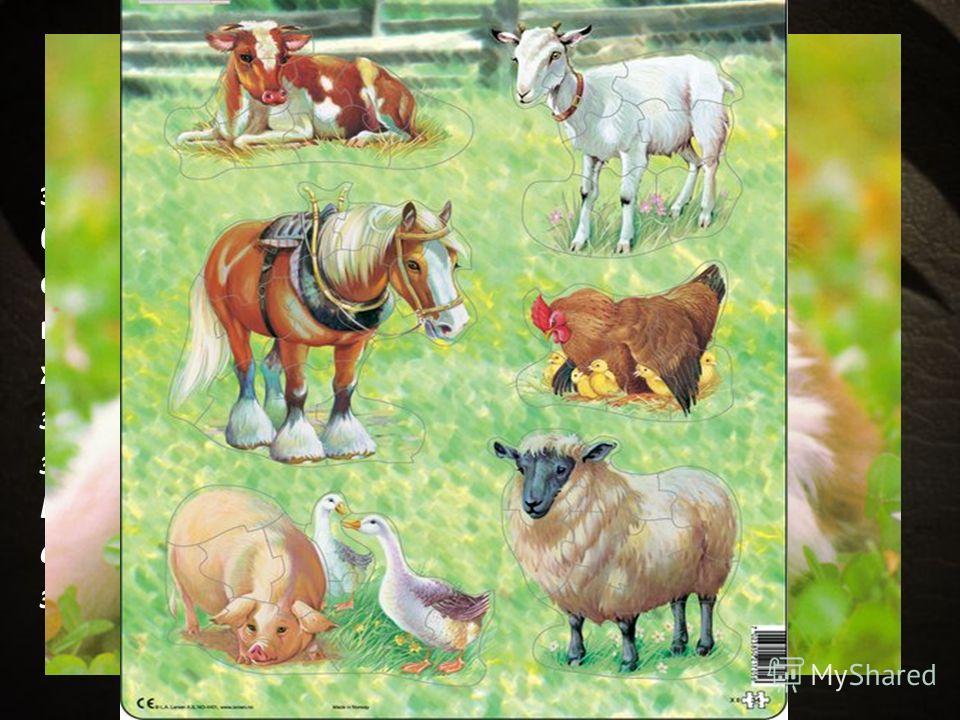 Шестой день творения Наконец образуются из земли (т.е. из стихий земных) животные, живущие на суше: скот или большие четвероногие животные, способные жить с человеком и служить ему, гады – животные ползающие, и звери – четвероногие, свободно живущие