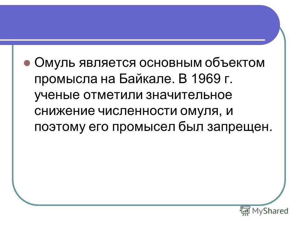 Омуль является основным объектом промысла на Байкале. В 1969 г. ученые отметили значительное снижение численности омуля, и поэтому его промысел был запрещен.