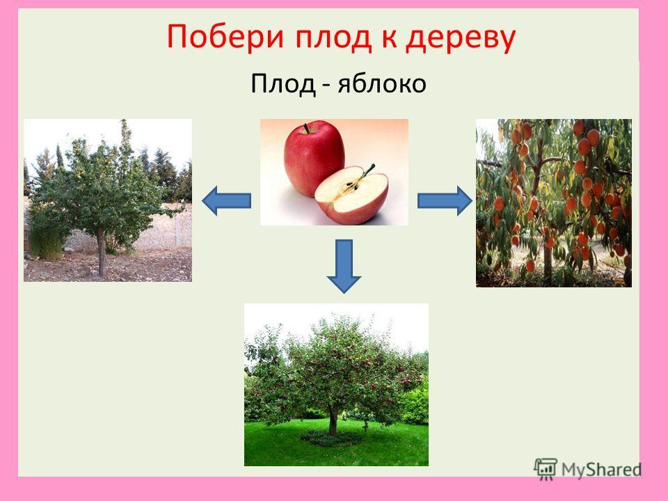 Побери плод к дереву Плод - яблоко