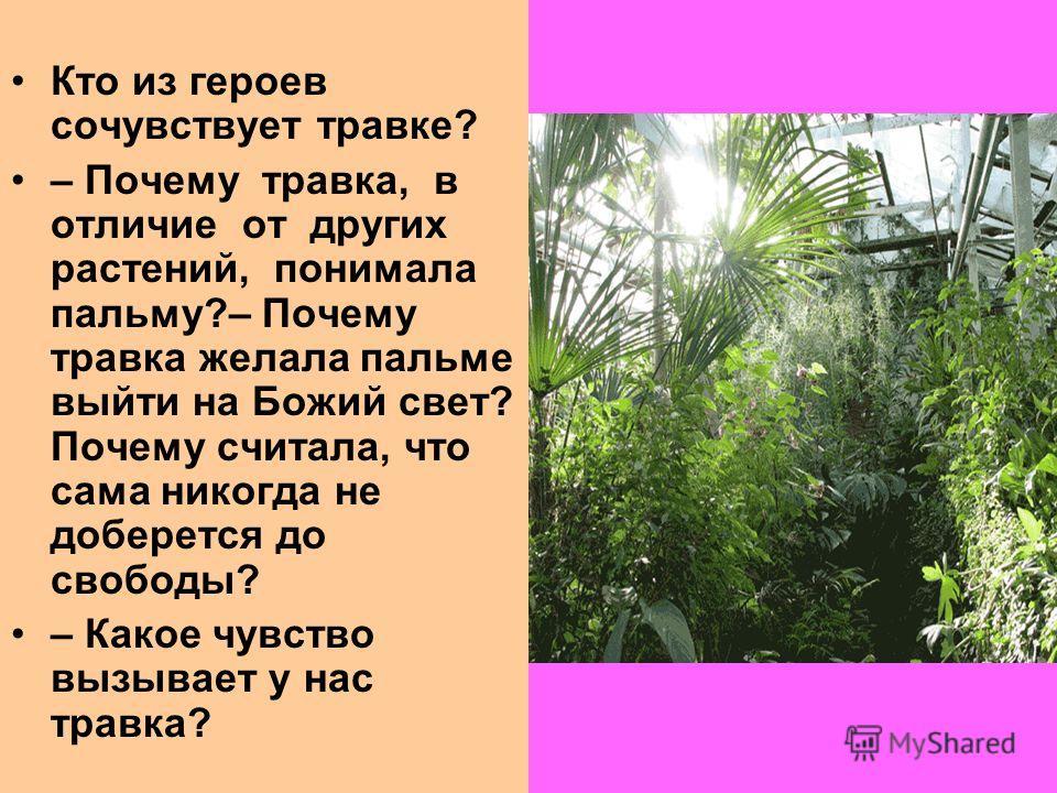 Кто из героев сочувствует травке? – Почему травка, в отличие от других растений, понимала пальму?– Почему травка желала пальме выйти на Божий свет? Почему считала, что сама никогда не доберется до свободы? – Какое чувство вызывает у нас травка?