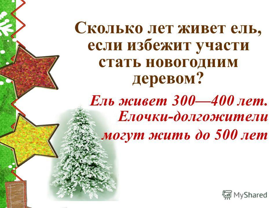 Сколько лет живет ель, если избежит участи стать новогодним деревом? Ель живет 300400 лет. Елочки-долгожители могут жить до 500 лет