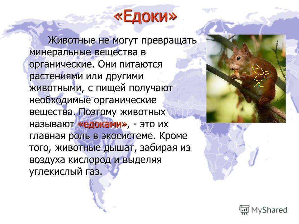 «Едоки» Животные не могут превращать минеральные вещества в органические. Они питаются растениями или другими животными, с пищей получают необходимые органические вещества. Поэтому животных называют «едоками», - это их главная роль в экосистеме. Кром