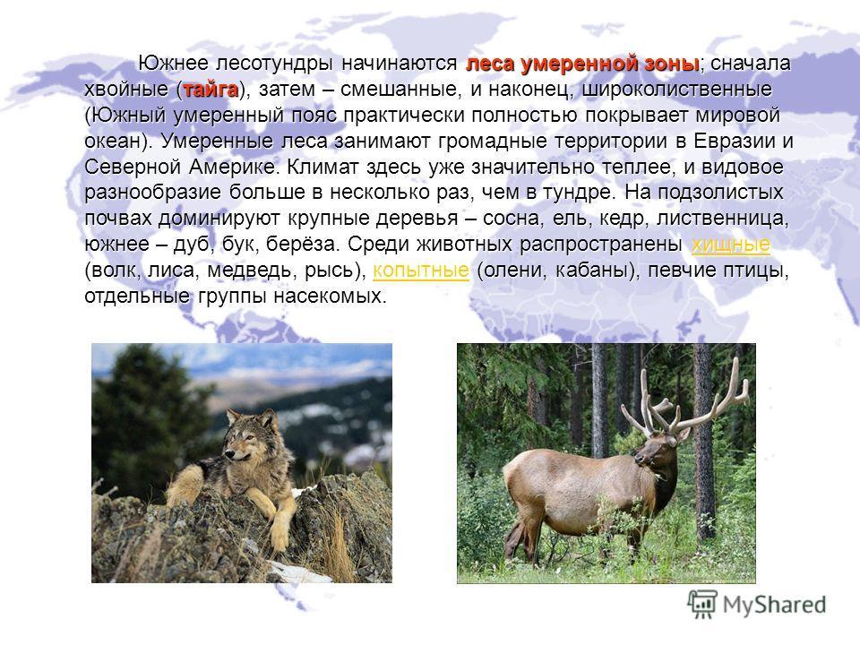 Южнее лесотундры начинаются леса умеренной зоны; сначала хвойные (тайга), затем – смешанные, и наконец, широколиственные (Южный умеренный пояс практически полностью покрывает мировой океан). Умеренные леса занимают громадные территории в Евразии и Се