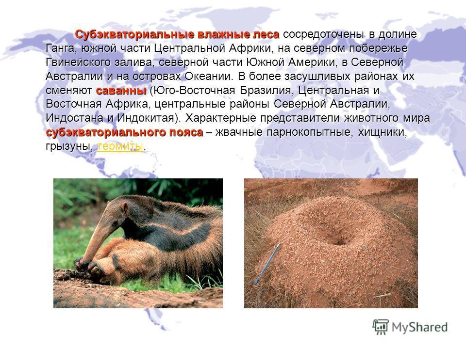 Доклад по теме экологические системы