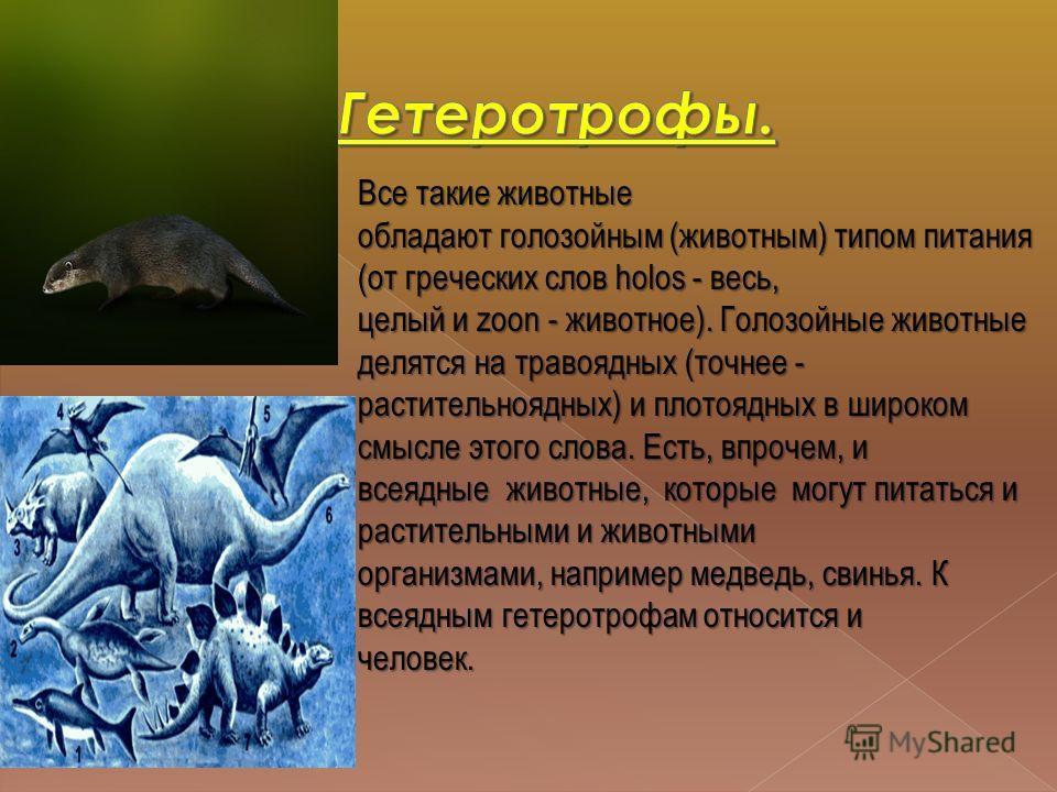 Все такие животные обладают голозойным (животным) типом питания (от греческих слов holos - весь, целый и zoon - животное). Голозойные животные делятся на травоядных (точнее - растительноядных) и плотоядных в широком смысле этого слова. Есть, впрочем,