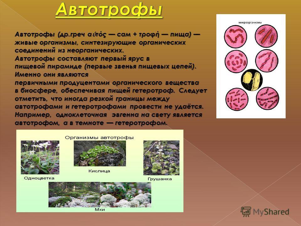 Гетеротрофы 9 класс