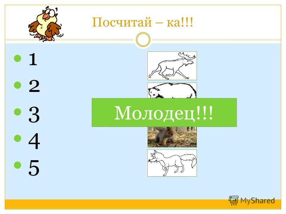 Найди нужное слово У медведя … У волка … У лося … У рыси … У белки … У лисы … У ежа … У зайца …. волчата лисята бельчата медвежата лосята ежата зайчата рысята