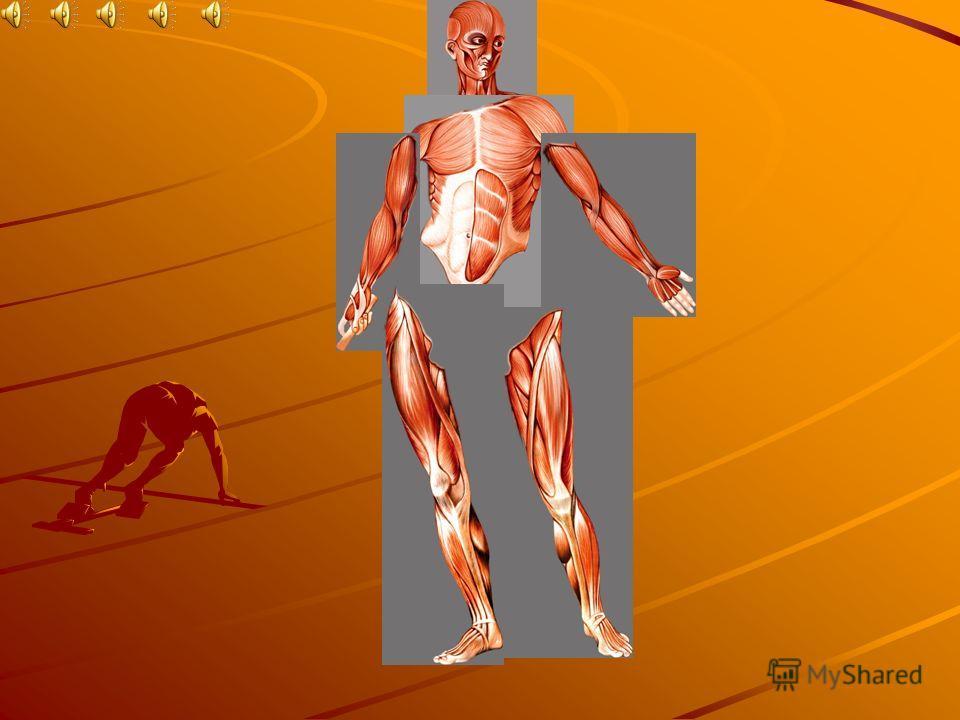 План урока: Строение скелетной мышцы. Строение и особенности мышечной ткани, её свойства. Основные группы мышц, их локализация и функции.
