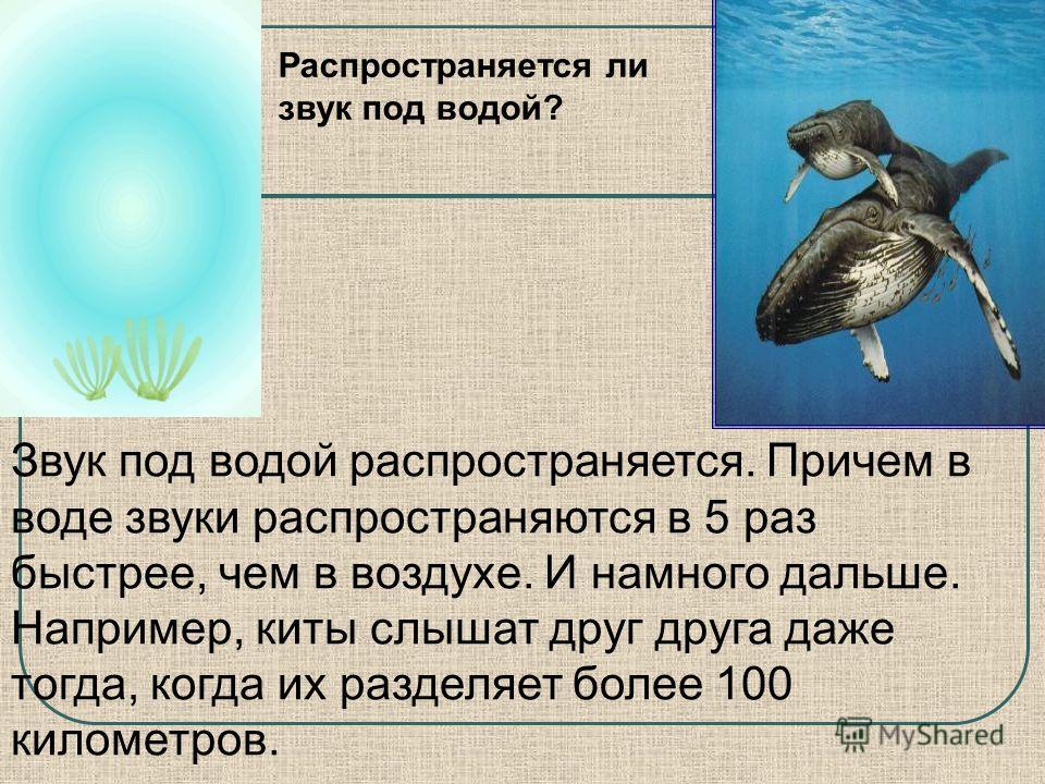 Звук под водой распространяется. Причем в воде звуки распространяются в 5 раз быстрее, чем в воздухе. И намного дальше. Например, киты слышат друг друга даже тогда, когда их разделяет более 100 километров. Распространяется ли звук под водой?