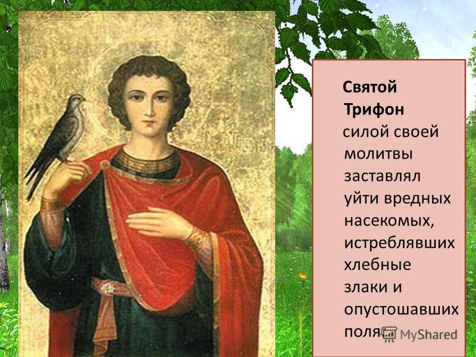Святой Трифон силой своей молитвы заставлял уйти вредных насекомых, истреблявших хлебные злаки и опустошавших поля.