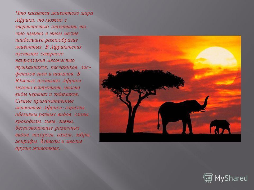 Что касается животного мира Африки, то можно с уверенностью отметить то, что именно в этом месте наибольшее разнообразие животных. В Африканских пустынях северного направления множество тушканчиков, песчаников, лис - феников гиен и шакалов. В Южных п