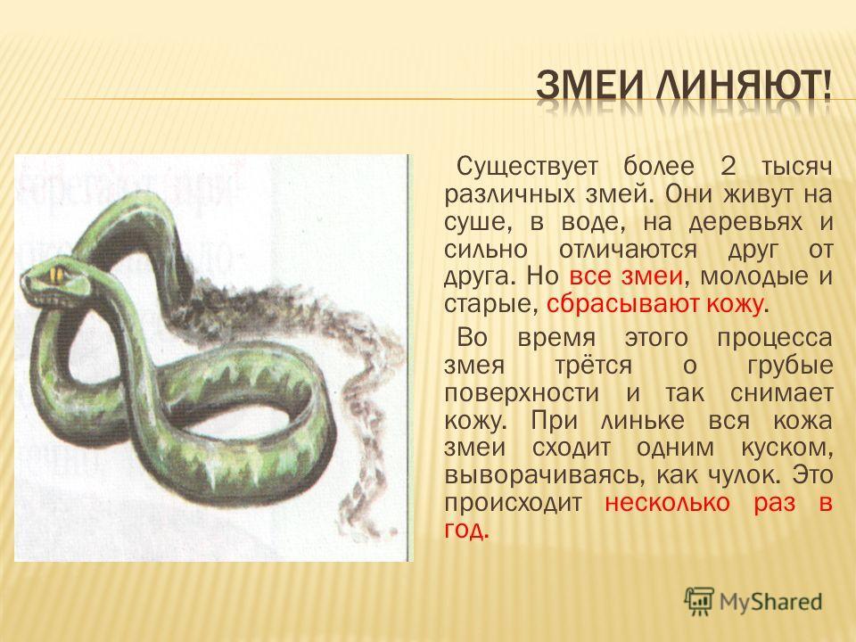 Существует более 2 тысяч различных змей. Они живут на суше, в воде, на деревьях и сильно отличаются друг от друга. Но все змеи, молодые и старые, сбрасывают кожу. Во время этого процесса змея трётся о грубые поверхности и так снимает кожу. При линьке