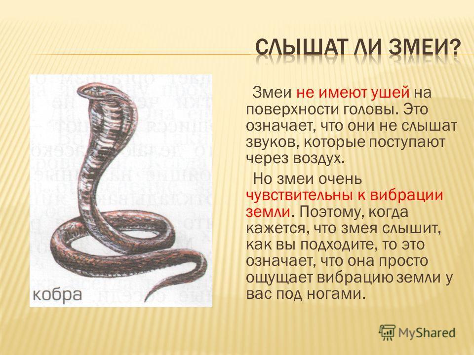 Змеи не имеют ушей на поверхности головы. Это означает, что они не слышат звуков, которые поступают через воздух. Но змеи очень чувствительны к вибрации земли. Поэтому, когда кажется, что змея слышит, как вы подходите, то это означает, что она просто