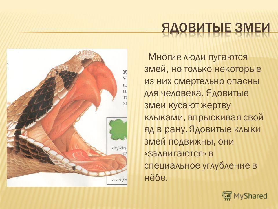 Многие люди пугаются змей, но только некоторые из них смертельно опасны для человека. Ядовитые змеи кусают жертву клыками, впрыскивая свой яд в рану. Ядовитые клыки змей подвижны, они «задвигаются» в специальное углубление в нёбе.