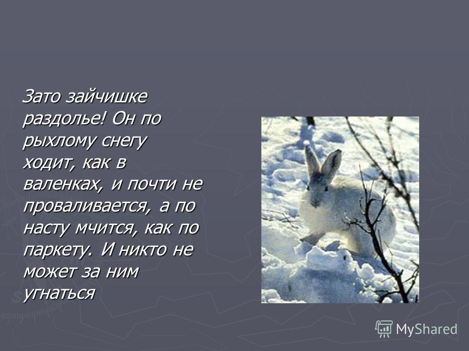 Зато зайчишке раздолье! Он по рыхлому снегу ходит, как в валенках, и почти не проваливается, а по насту мчится, как по паркету. И никто не может за ним угнаться Зато зайчишке раздолье! Он по рыхлому снегу ходит, как в валенках, и почти не проваливает