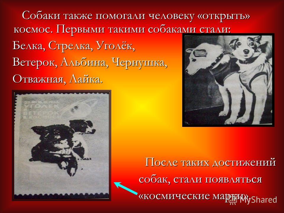 Собаки также помогали человеку «открыть» космос. Первыми такими собаками стали: Собаки также помогали человеку «открыть» космос. Первыми такими собаками стали: Белка, Стрелка, Уголёк, Белка, Стрелка, Уголёк, Ветерок, Альбина, Чернушка, Ветерок, Альби